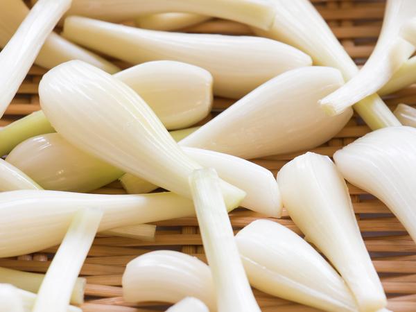 砂丘で農作物を収穫!? 鳥取県のおいしい食材と特産品【47都道府県の地域食材】