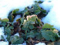 冬野菜は温まる?〜冬野菜と夏野菜の違いとは〜