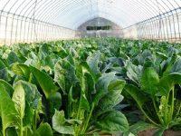 「農業を特別視しない」 生産力・販売力・働きやすさ向上計画