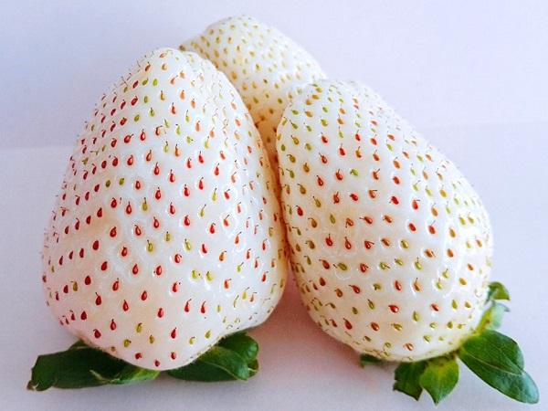 白いちごの新品種が誕生、ブランド名を募集中 50年連続生産量1位の栃木県