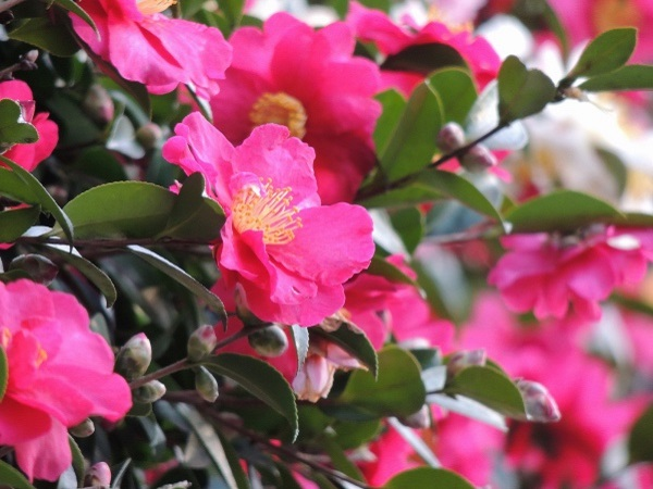 季節の暦 二十四節気「立冬」〜いよいよ冬の始まり〜