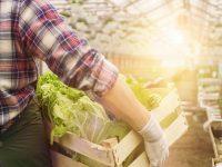 農家の働き方改革 農業従事者が知っておくべき「適切な労務管理」