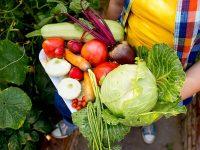 規格外野菜を福祉施設へ寄付 JA甘楽富岡のフードバンク活動