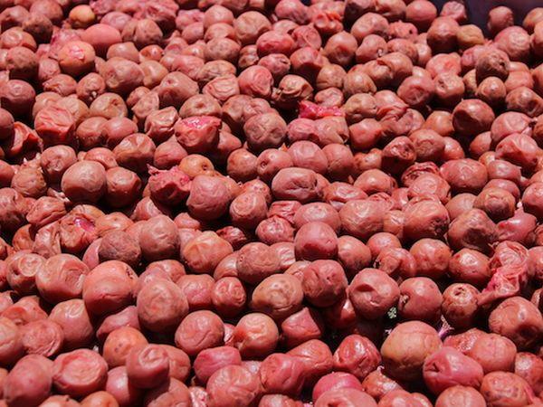 古来種「鶯宿梅」の梅パワー 徳重紅梅園の自然栽培