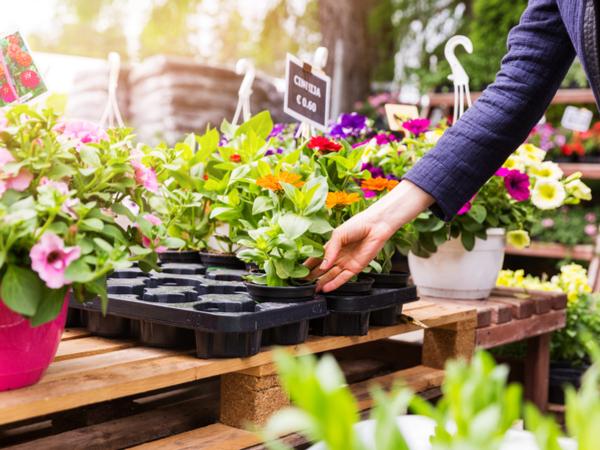 【元気な農作物育成ガイド】初心者でも分かりやすい 自家栽培に向いた強い品種の選び方