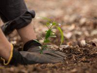 【元気な農作物育成ガイド】必読!病害虫に強い種苗の選定方法
