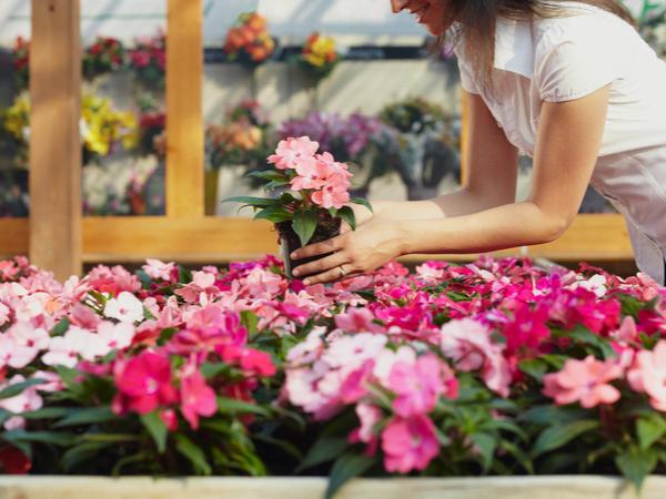 【元気な農作物育成ガイド】知識を深める!栽培環境に合った植物の選び方