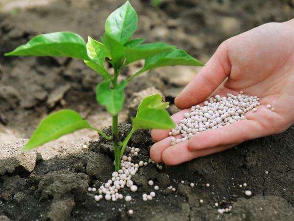 【元気な農作物育成ガイド】自家栽培で知っておきたい! 肥料の基礎知識