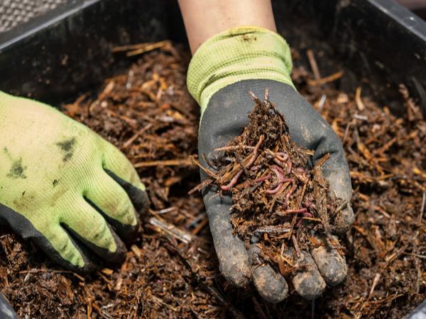 【元気な農作物育成ガイド】知らなきゃ損する!?堆肥の基礎知識と注意点