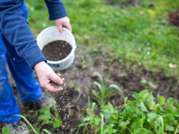 【元気な農作物育成ガイド】上手に肥料を与えるタイミングと注意点
