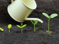 【元気な農作物育成ガイド】やりすぎは禁物! 上手な水やり入門