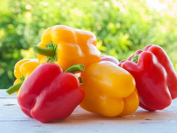 パプリカ・シシトウ・トウガラシの栄養 おいしく食べる下準備と保存法【野菜ガイド】
