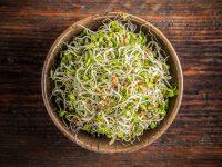 今注目の野菜! スプラウトの栄養・種類、下ごしらえ方法【野菜ガイド】