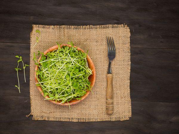 安くて栄養たっぷり 豆苗・オクラの下ごしらえ・保存法【野菜と果物ガイド】
