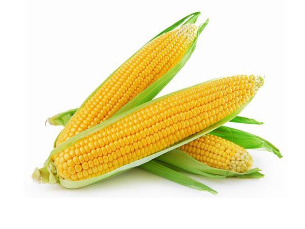 新鮮なトウモロコシの見分け方とは 下ごしらえ・保存法【野菜と果物ガイド】