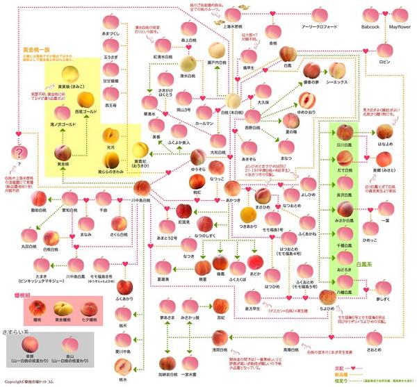 桃の家系図