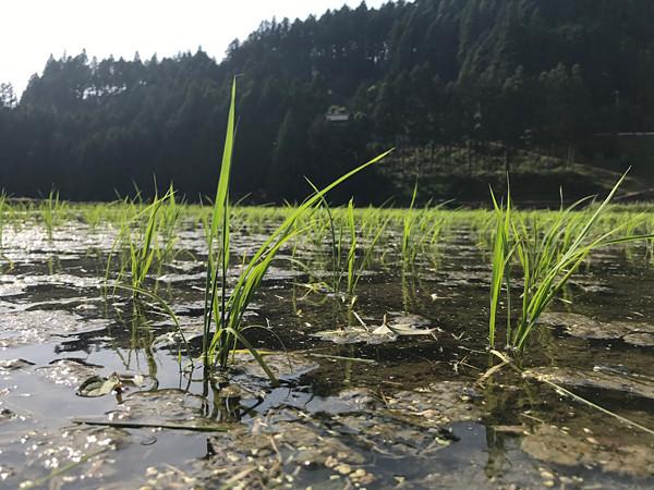 21世紀育ちが創る「むかし未来」 日本と世界を変える里山農業プロジェクトの芽吹き