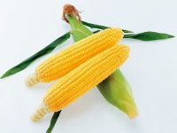 """ゴールデンウイークが最適! 簡単・手軽で失敗しない、真夏に収穫できるおいしい野菜の""""種まき"""""""
