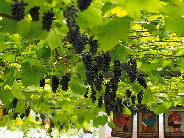 """""""ブドウがなりたいワイン""""を造る、障害者のワイナリー 美味しさの秘密とは【後編】"""