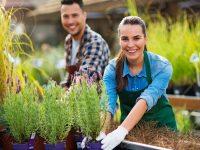 女性による営業・販売で経常利益が7倍以上! 女性と農業経営の実態