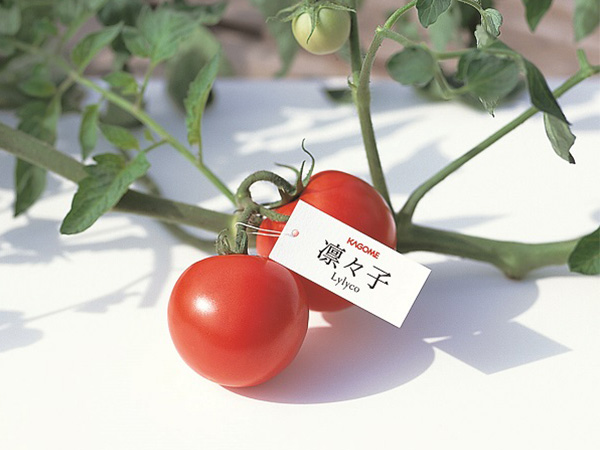 トマトの栽培体験で野菜をもっと身近に!カゴメが取り組む食育活動