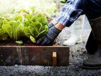 気軽に始められる、東京都内や近郊の週末農園5選