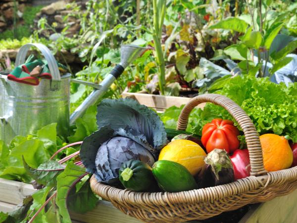 東京23区でも野菜の収穫が楽しめる!おすすめの区民農園