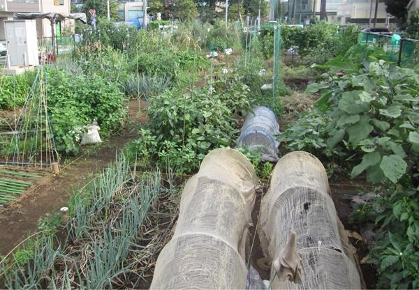 板橋区農園