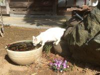 かわいいネコと一緒に農家メシを堪能 農家レストラン八甲城