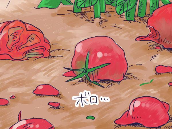 漫画「農家に憧れなかった農家の娘」第16話 農家の大敵!カラスとの戦い