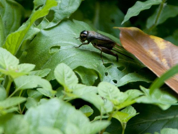 国連推奨 昆虫は未来の食糧? タランチュラも、コオロギも楽しく味わえる