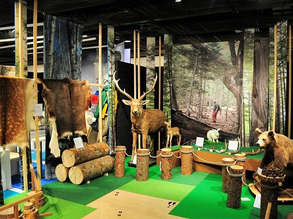北海道の生態系を表すは展示コーナーは、まるで森林の中のような空間