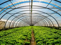 施設園芸農業の取り組みと参入企業