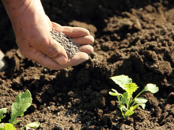 有機肥料とは? 化学肥料との違いについて