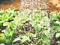 畑は水やりしない方が良い!野菜づくりの新常識【畑は小さな大自然vol.1】