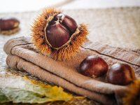 秋の味覚 おいしい栗の見分け方とむき方のコツ【野菜ガイド】