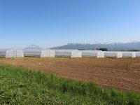 年間を通じてがっちり稼ぐ! 北海道・共和町で就農スタッフ募集