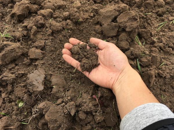 土壌微生物研究所
