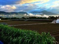コストを抑える不耕起自然栽培農業 その先に目指すもの