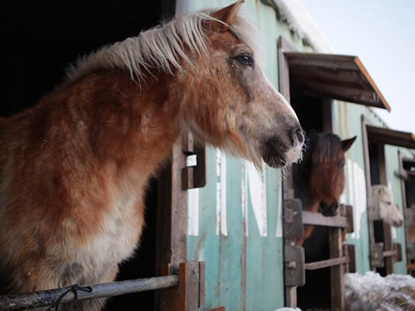 引退競走馬にも新たな活躍の場を 循環が生み出す馬のセカンドキャリア