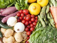 空港利用者が成田で農業体験 JALが農業事業に参入