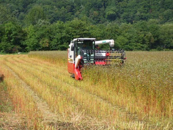 秋の小麦収穫作業