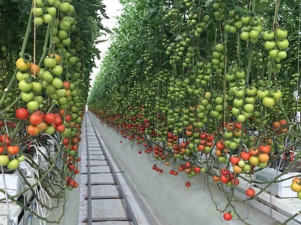 植物の声を聴く「プラントデータ」