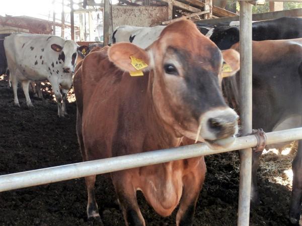 牧畜を楽しみ人も牛も幸せに 磯沼ミルクファームのビジョンとチャレンジ