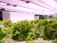 いま注目の「植物工場」とは? ハウス栽培とどう違う?農薬は必要?