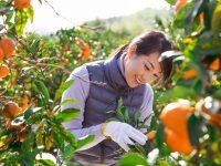 兼業農家の補助金制度と確定申告
