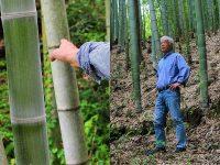 """放置竹林を農業に有効活用、""""厄介者""""が有機野菜の源に"""