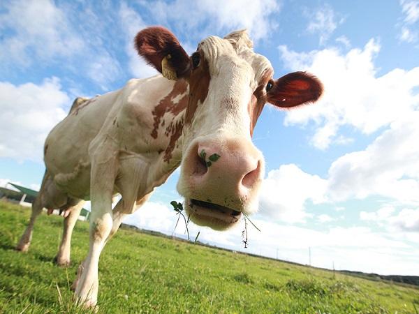 持続可能な未来へ オーガニック乳製品の魅力を発信