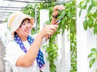<詳報! アグリテックはここまで来た!> 自然エネルギー・最新の栽培技術・IoTのタッグで耕作放棄地問題と農業振興に取り組む