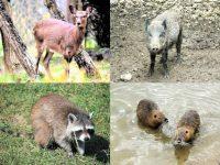 狩猟できる動物は48種に決められている! 前編・獣類20種